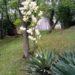 街角の白くてデカい花!君の名は?